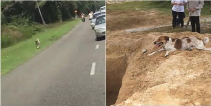 Este perro corrió 3 kilómetros tras carroza fúnebre de su dueña (VIDEO)