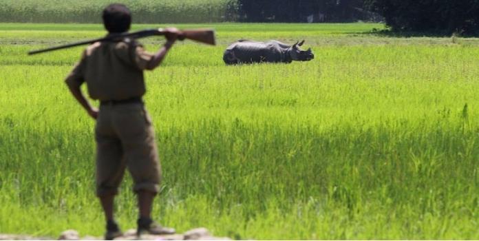 En este parque es legal matar cazadores para proteger a los rinocerontes