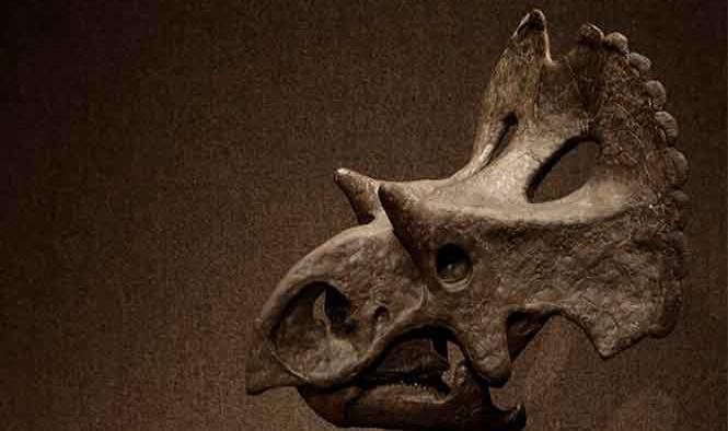 Muestran al mundo una nueva especie de dinosaurio hallado en Coahuila