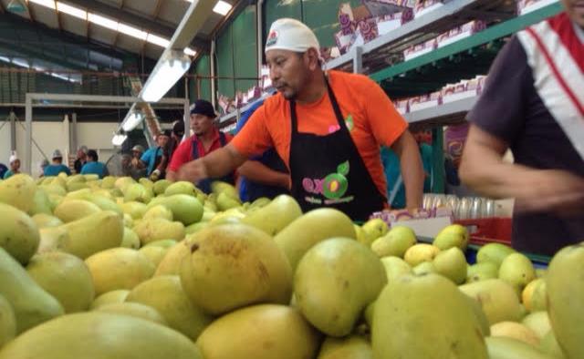 Oaxaca, tierra del mango, no deja de cosechar ni enviar su fruta a EU