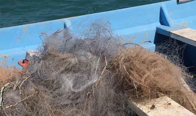 Proponen veda light' para el hábitat de la vaquita marina