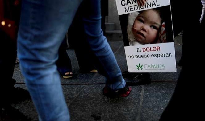 Argentina aprueba uso medicinal de cannabis