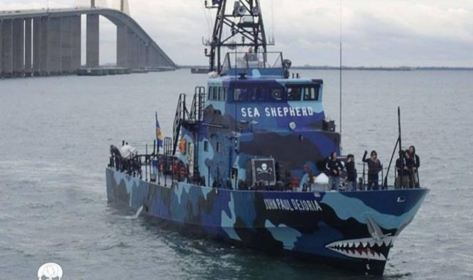 ONGs exigen seguridad para agrupación que protege a vaquita marina