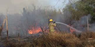 Arde maleza muy cerca de viviendas