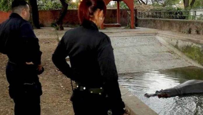 A golpes, matan a hipopótamo