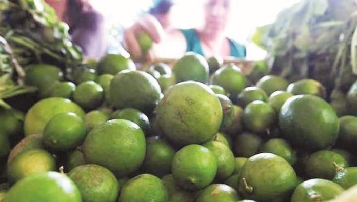 Afecta plaga producción de limón