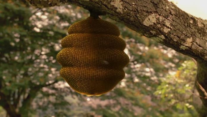 Brinda PC servicio a niños con picadura de abejas