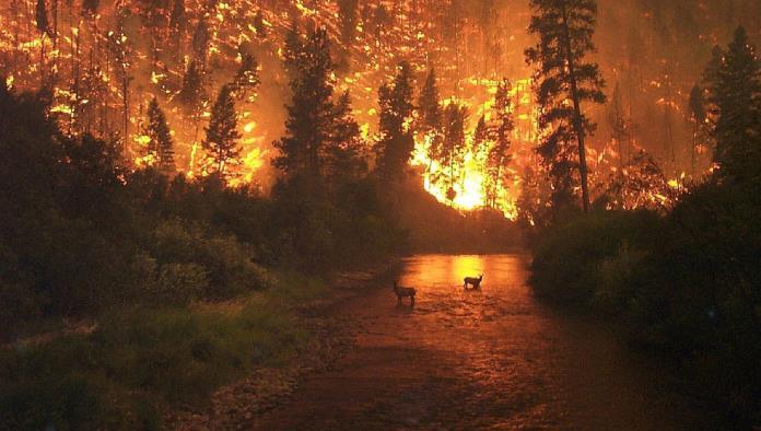 Multas de 1.6 mdp  por causar incendios