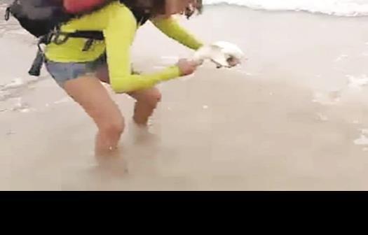 Saca a tiburón para selfie; la muerde