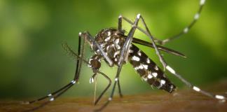 Inicia hoy campaña contra el dengue
