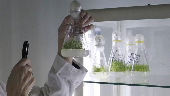 Reinician en secreto uno de los experimentos científicos más largos del mundo