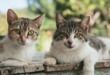 Corea del Sur: Buscan a Asesino serial de gatos