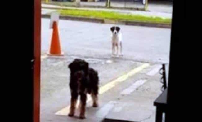 Perrito callejero lleva a su amigo a un restaurante para que les den comida
