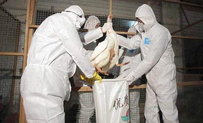 Terrible: confirman el primer contagio humano de la gripe aviar H10N3