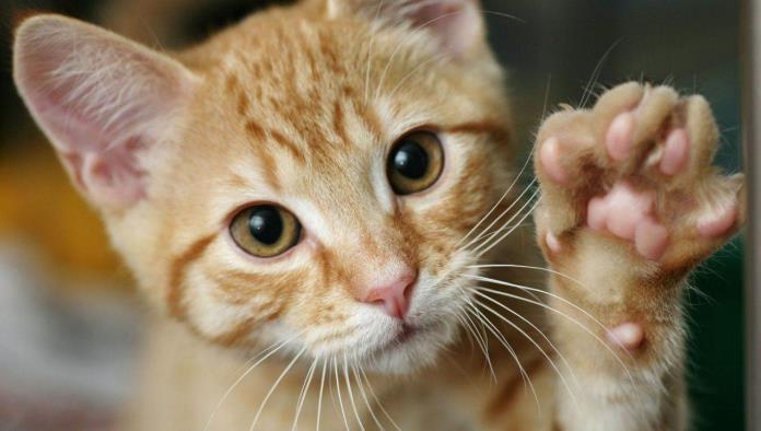Gatito le pide a su dueño que lo empuje en un columpio