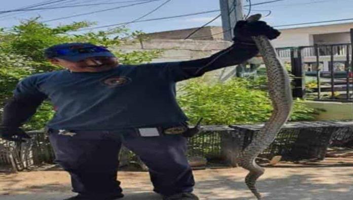 Alarma aparición  de serpientes