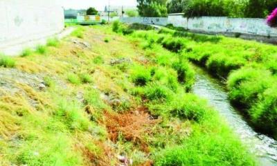 Detectan larvas de dengue en la Borja