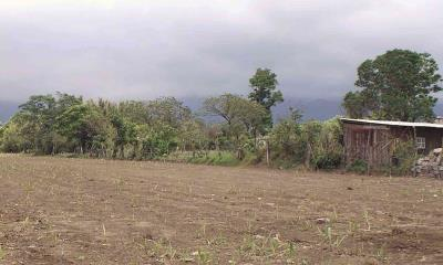 Baja producción agrícola al 50%