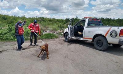 Rescatan a perro de alcantarilla