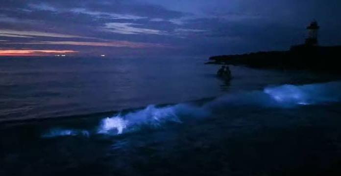 Captan mar que brilla en la oscuridad