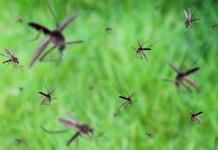 Captan Tornado de Mosquitos en Rusia