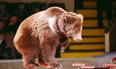 Un oso ataca a su entrenadora durante show infantil