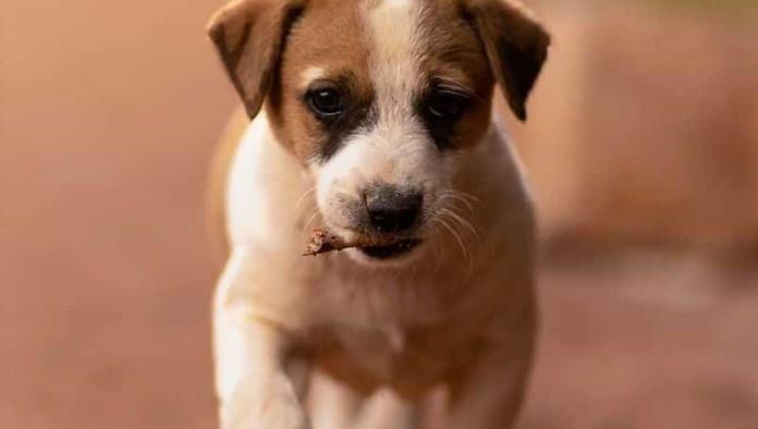 Indignación en Hidalgo; Hombre enveneno masivamente a perros