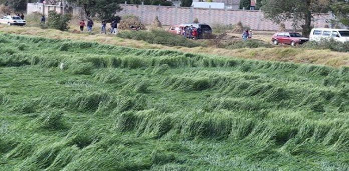 Misterio en Puebla; Aparecen señales en cultivos cerca de socavón