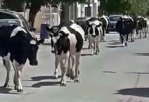 Regresa la policía rural