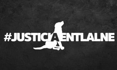 #JusticiaEnTlalne Exigen justicia por perro torturado en Edo. de México
