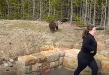 Mujer enfrenta cargos por tomarle foto a un oso