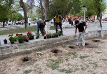 Reforestarán la Plaza Principal