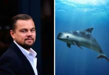 Leonardo DiCaprio señala al Gobierno Mexicano de abandonar a la vaquita marina