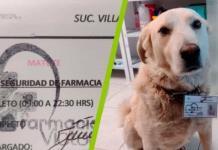 Farmacia contrata a perrito como jefe se seguridad