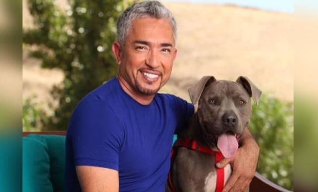 César Millán en problemas legales porque uno de sus perros atacó a una gimnasta