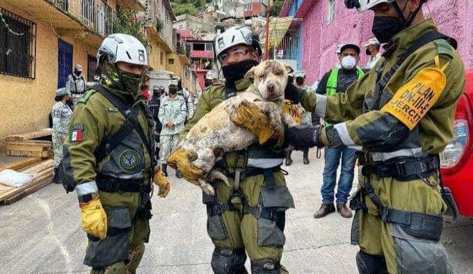 Sedena rescata a perro del derrumbe en el Cerro del Chiquihuite