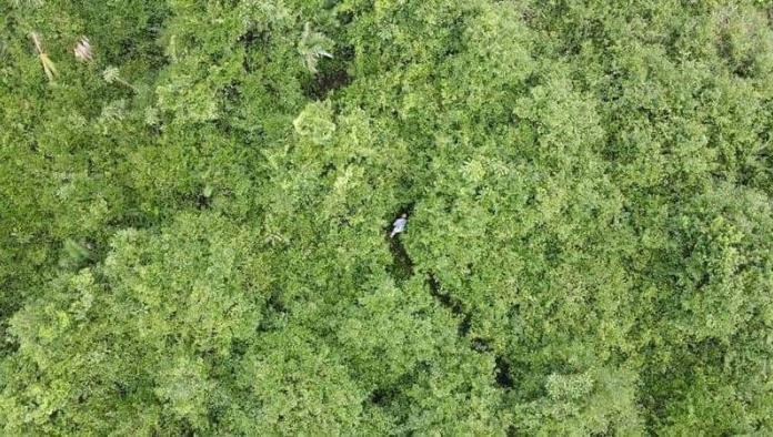 Abuelo se pierde en la selva tabasqueña; Lo encuentran con dron