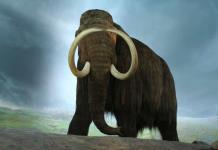 Recaudan 15 millones de dólares para revivir a los mamuts