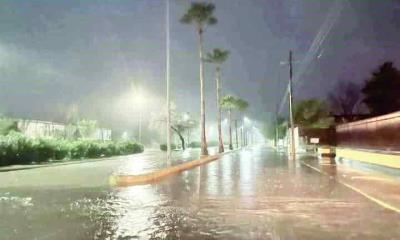 Tumban lluvias árboles