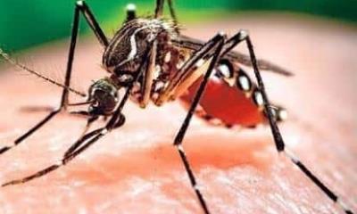 Reportan más casos de dengue