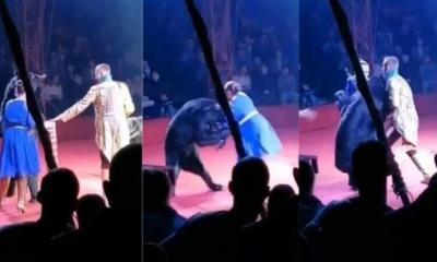 Mujer embarazada es atacada por un oso durante una presentación de circo (VIDEO)