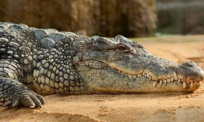 Niña muere por ataque de cocodrilo en Indonesia