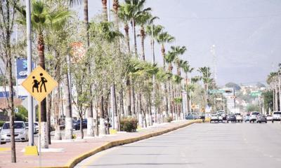 Plantaron más de 3 mil 500 árboles